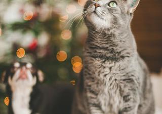 Tips to Keep Pets Safe This Holiday Season